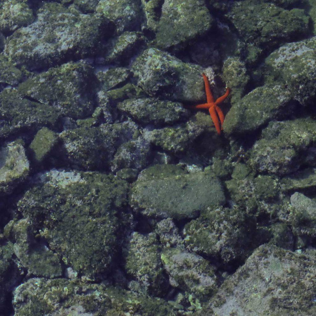 collioure étoile de mer