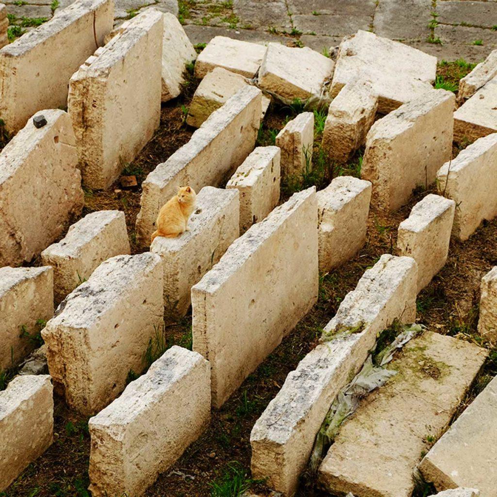 rome Largo Argentina chat