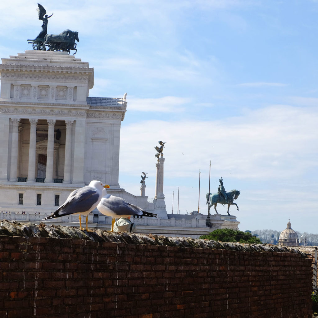 rome victor-emmanuel II mouette