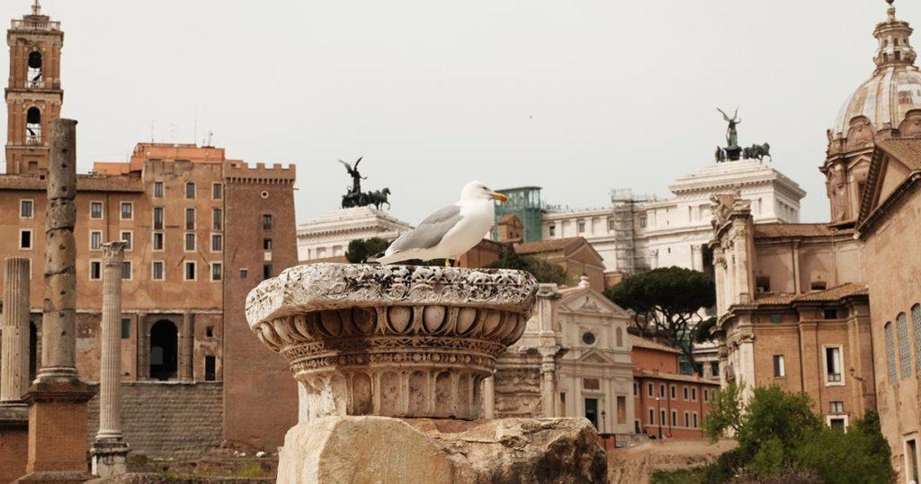 Rome Forum mouette