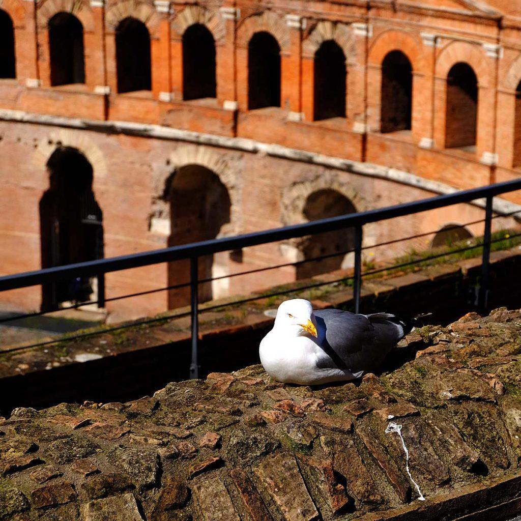 rome marché de trajan mouette