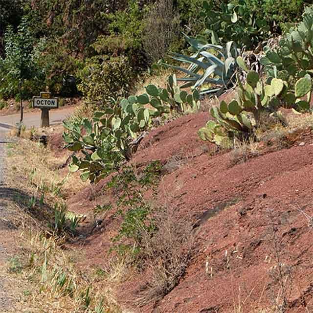 octon-cactus